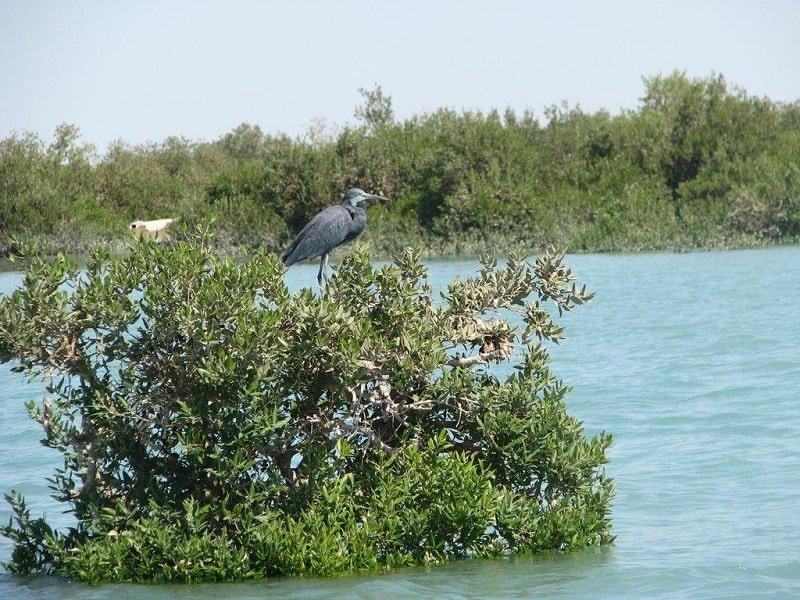 مهاجرات پرندگان دریایی