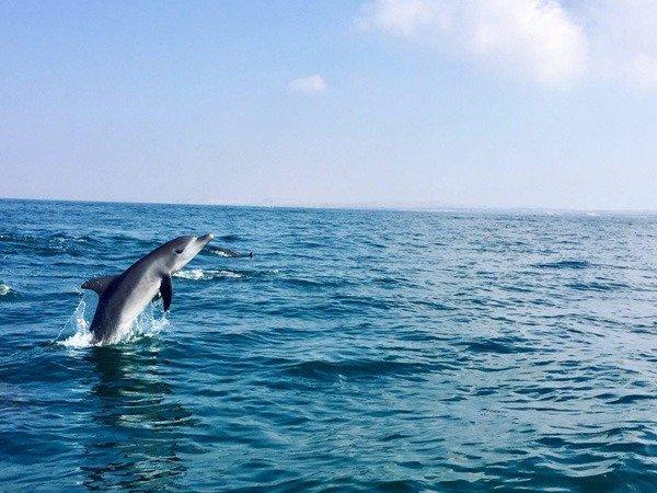 رقص دلفین ها در جزیره هنگام
