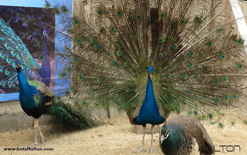 پارک کروکودیل قشم:دیگر جانداران